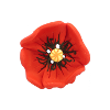 Bouton gros coquelicot rouge